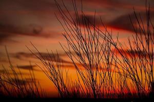céu laranja com ramos