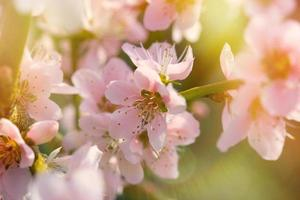 foco suave no ramo florescendo foto