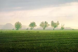 campo de trigo contra o céu azul com nuvens brancas. cena agrícola