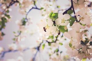 felicidade da primavera
