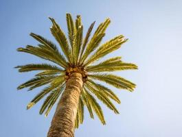linda palmeira com céu azul ensolarado