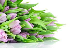 tulipas violetas foto
