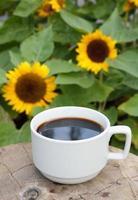 xícara de café em fundo de girassóis foto