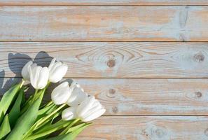 bando de tulipas brancas com espaço vazio na madeira velha foto