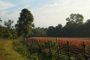 manhã de fazenda foto