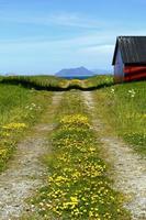 estrada de fazenda foto