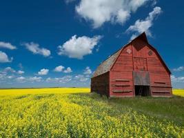 fazenda em Saskatchewan foto