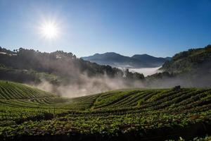 fazenda de morango de manhã. doi angkhang, província de chiangmai. Tailândia foto