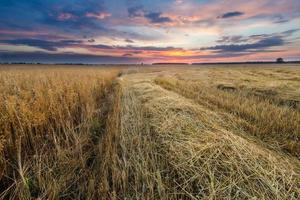 campo de restolho ao pôr do sol, paisagem com nuvens espetaculares