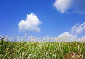 céu de grama de pradaria