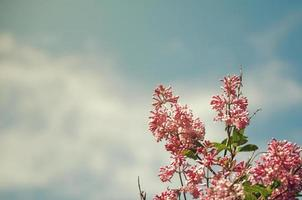 lilases e céu foto