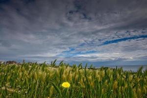trigo e céu
