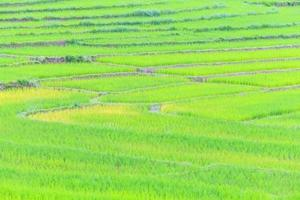 agricultura fazenda arroz