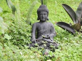 estátua de Buda em trevos verdes