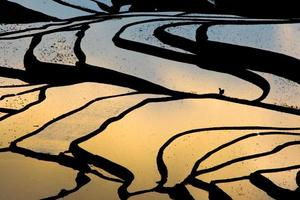 campo de arroz em socalcos (yuanyang hani)