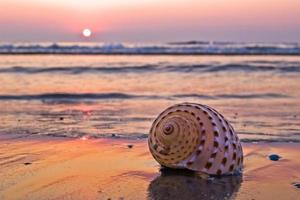 concha na praia foto