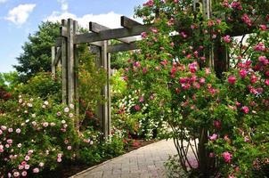 jardim verde exuberante em plena floração foto