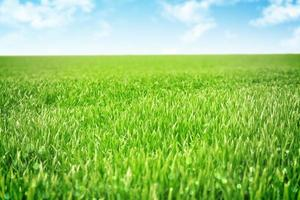 céu e fundo de grama