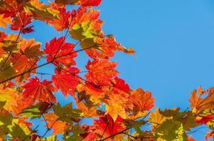 folhas coloridas contra o céu