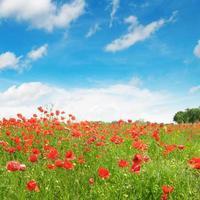 prado e céu azul