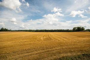 campo de verão, paisagem enorme do céu