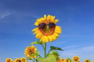 flor do sol contra um céu azul foto