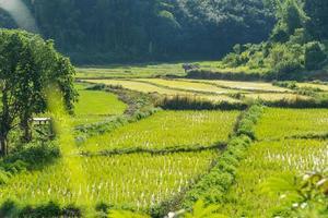 arroz preenchido com céu azul cabana de madeira