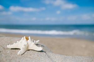estrela do mar branca com oceano, praia, céu e paisagem marinha foto