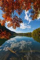 folhas vermelhas no céu azul