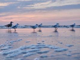gaivotas à noite foto