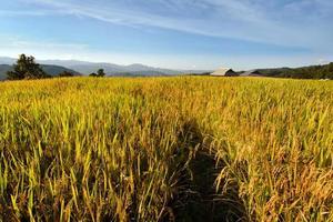 vista da fazenda de arroz, casa e céu azul nublado