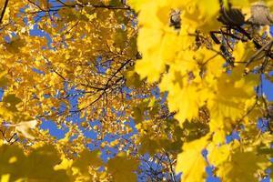 dentro da árvore de bordo no outono foto
