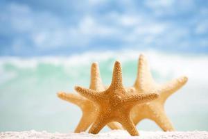 estrela do mar vermelha com oceano, praia, céu e paisagem marinha, dof raso