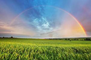 arco-íris sobre campo de primavera