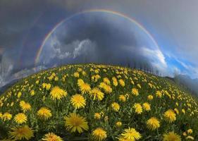 clareira flores de primavera e verão