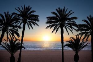 silhuetas de palmeiras foto