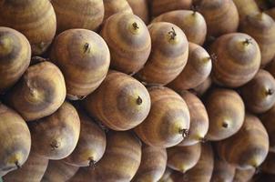 coco de palma brasileira