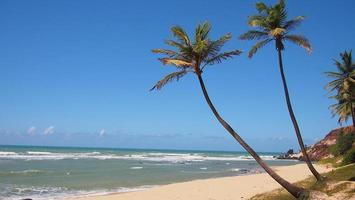 palmeiras e praia