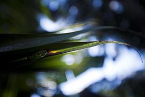 folhas de palmeira em uma colônia de leite de Aarey