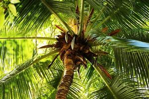 olhando através das folhas de uma palmeira