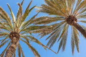 algumas palmeiras perto da praia