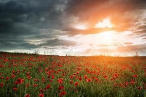 bela paisagem de campo de papoulas durante o pôr do sol com céu dramático