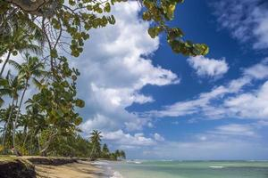 praia tropical com palmeiras