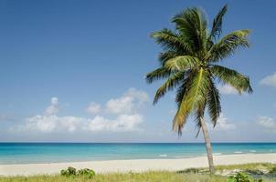 praia exótica com palmeiras altas, caraíbas