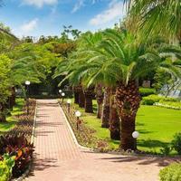 palmeiras tropicais e gramado