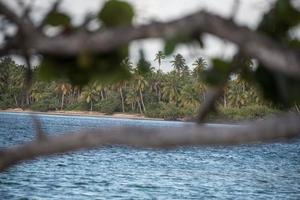 mar do caribe, praia e palmeiras