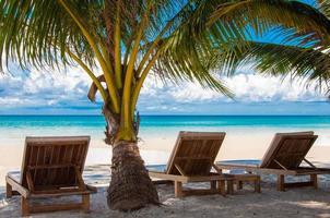 espreguiçadeiras em exótica praia de palmeiras