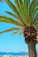 palmeira à beira-mar em alghero