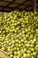 cocos em armazenamento foto
