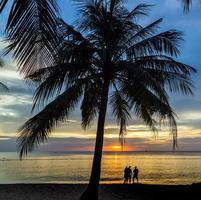 silhueta das palmas